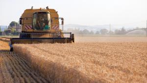 rolnictwo, pole, uprawa, żniwa, kombajn, rolnik