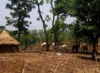 MSZ potwierdza: Uprowadzono 8 Polaków u wybrzeży Nigerii
