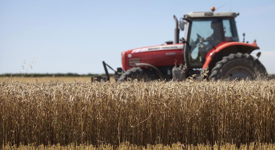 Zbiory pszenicy w Wielkiej Brytanii (3)